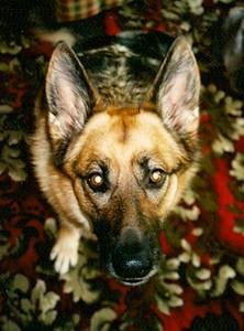2012-11-26 Dogs 7.jpg