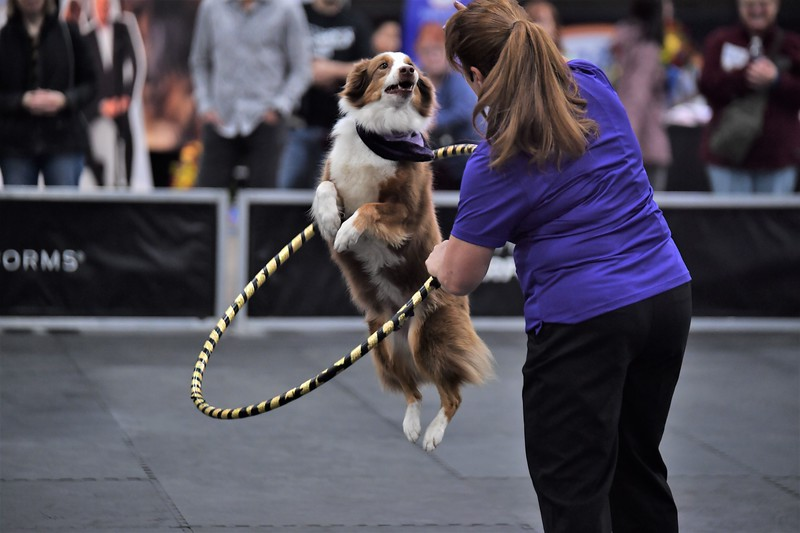 dogshow5.jpg