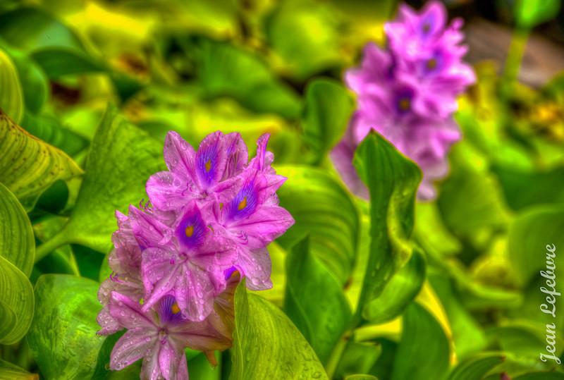 Haiti_Flower3.jpg