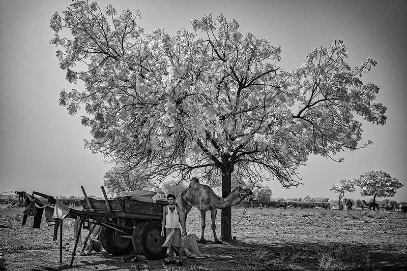 Camel Tree.jpg