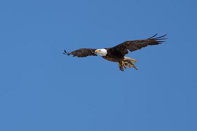2021 Bald Eagles