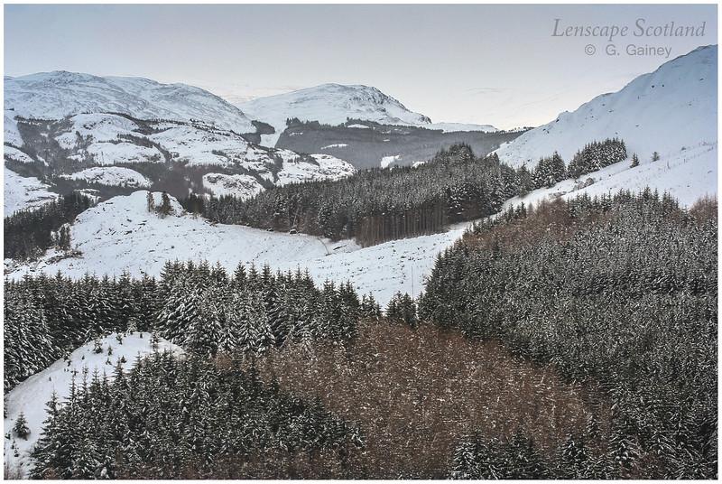 forestry plantations under snow, Gleann Ghoinean, near St. Fillans