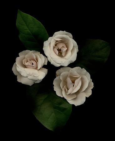 florals & botanicals