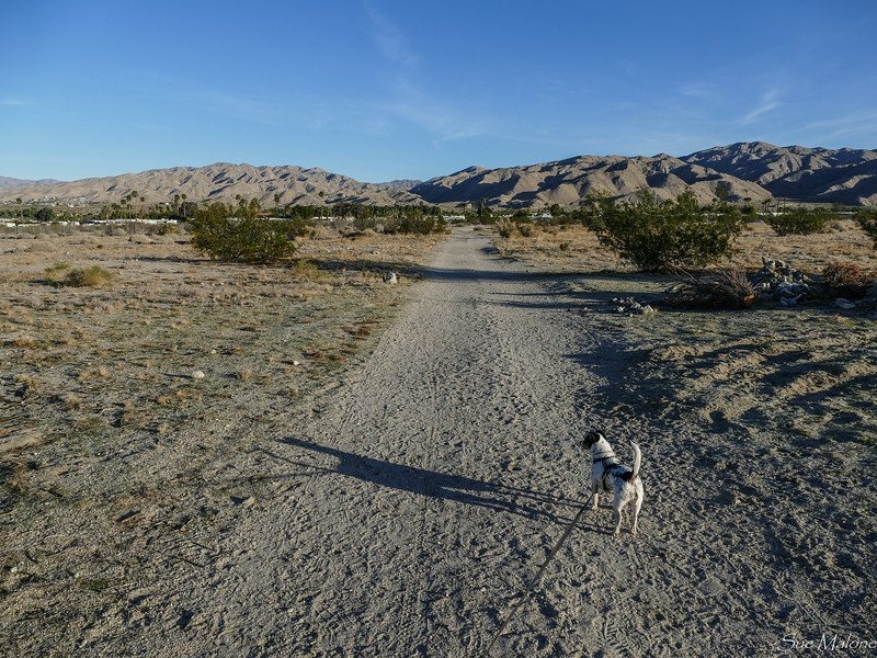 dog walk in the desert (3 of 13).jpg
