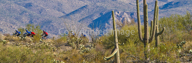 Arizona - Saguaro National Park - Road Riders (Biking)