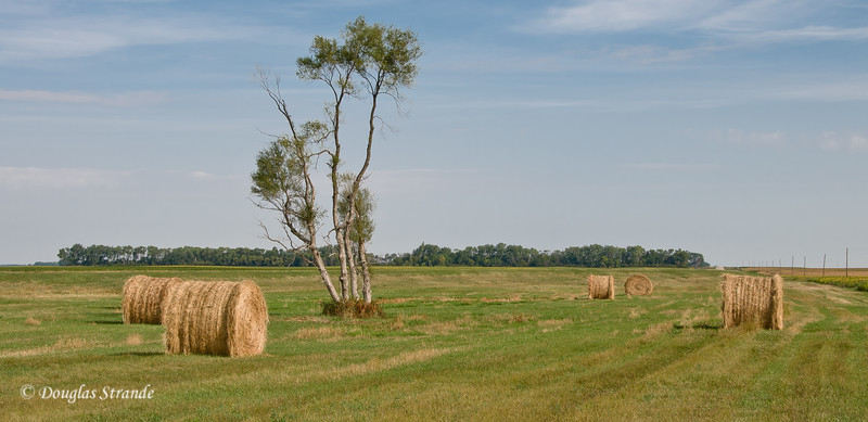 Bales and open space