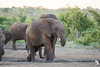 elephants enjoying a salt pan