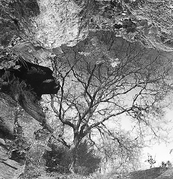 Pete - Tree