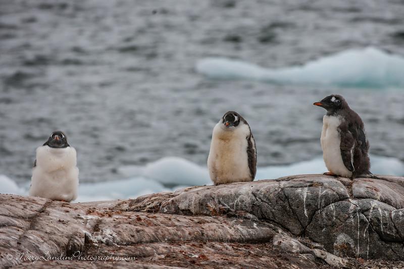 Antarctic-44
