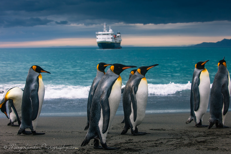 Antarctic-109