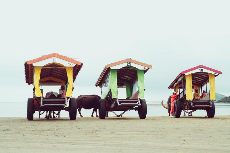 Okinawa Ox Wagons