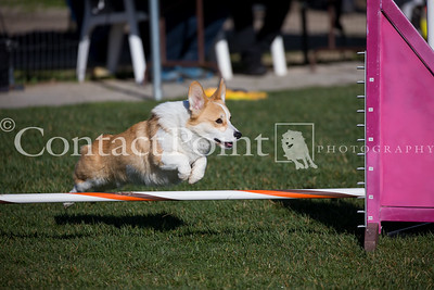 Contact Point AKC Agility February 2019