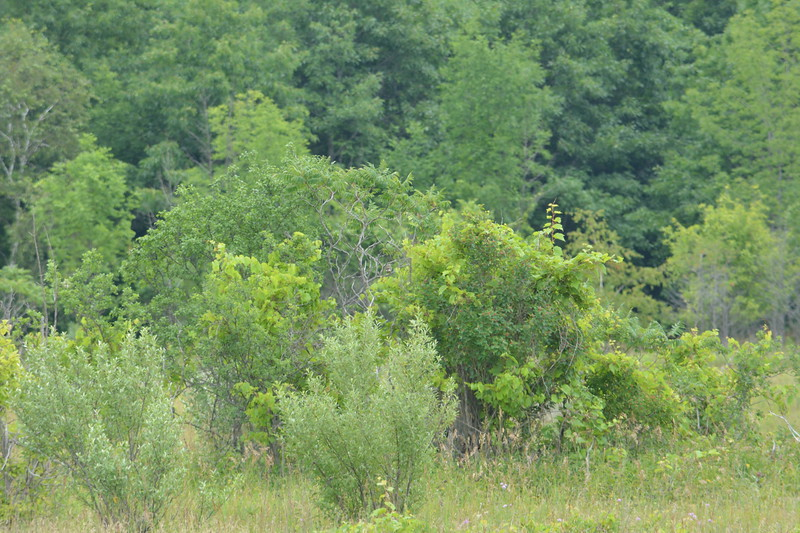 Area of Meadowlark Nest , in Area 5 (Photo by Thomas Jackman)