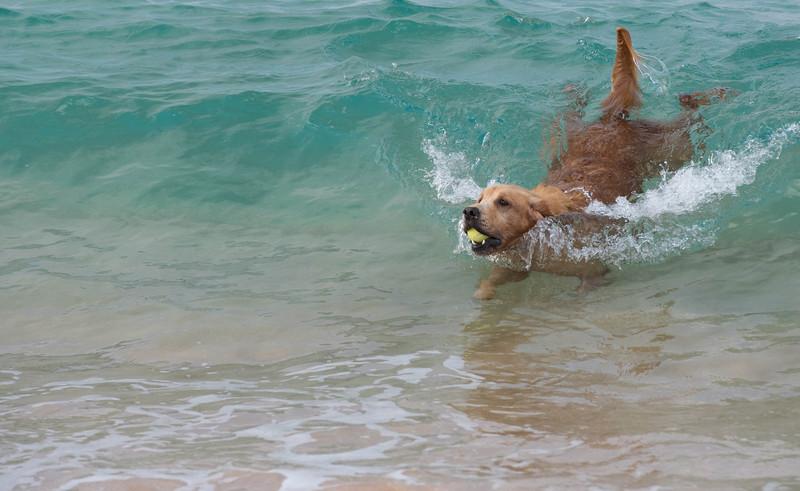 Maile Surfing-2.jpg