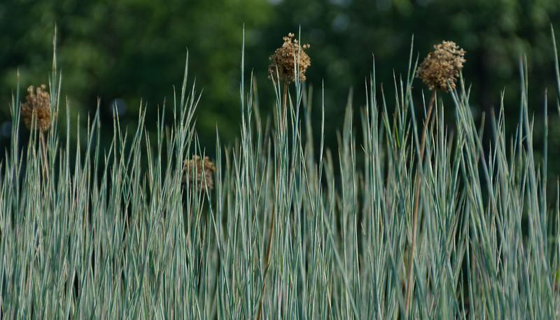 Standing Ovation Grass (1).jpg