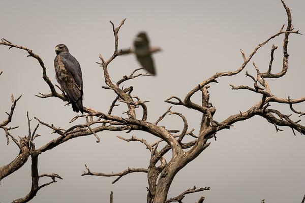 20181004-Guayascates Dove Hunt-Argentina