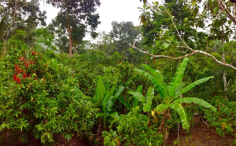 Napo Rainforest