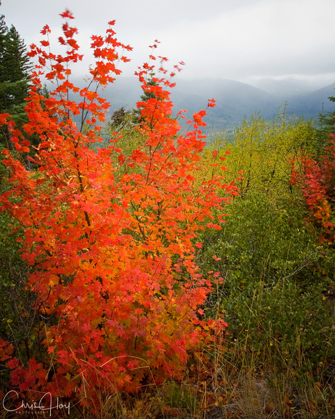 Fall color on Mt. Hood