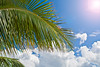 Palm tree with blue sky and clouds in background with sun shining down.