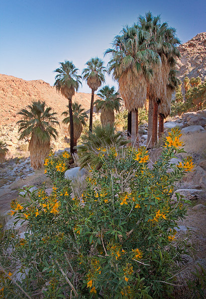 49 Palm Oasis Joshua Tree