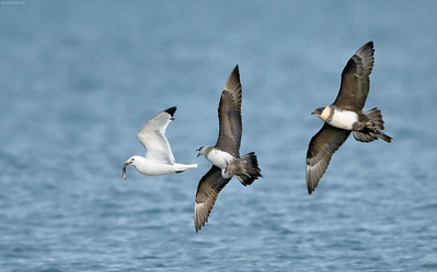 Seabirds, Penguins, and More