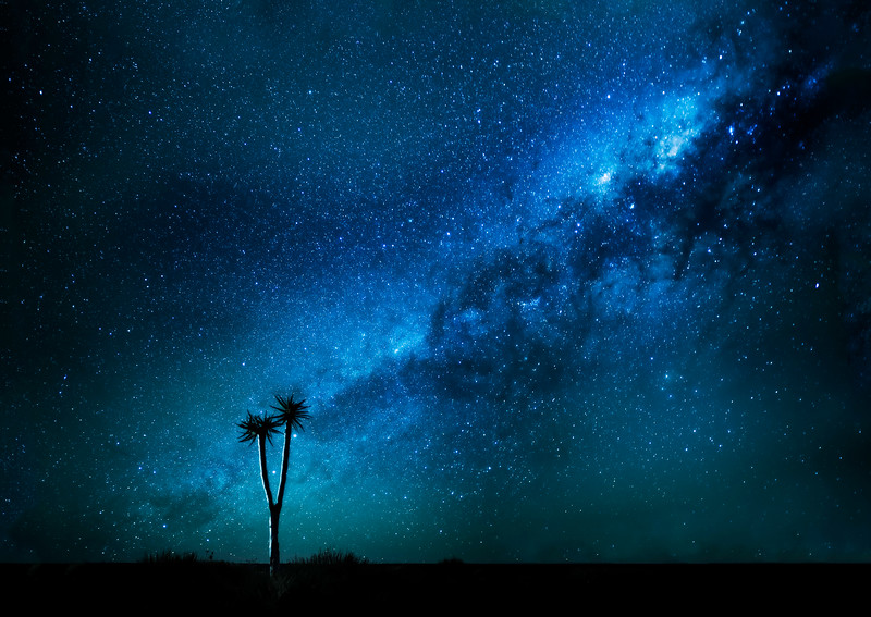 Quiver Tree Milky Way.jpg
