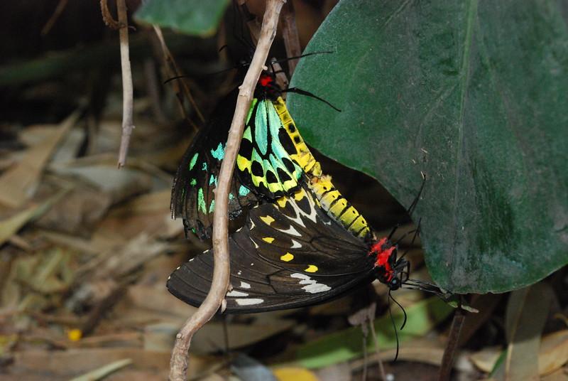 Denver Butterfly Pavilion 2432914012.jpg
