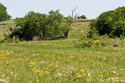 Texas Wildflowers at Eagles Canyon.