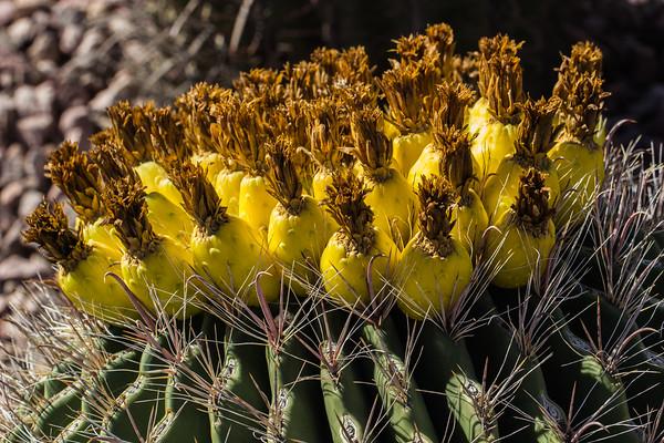 Arizona Trip_January 2014