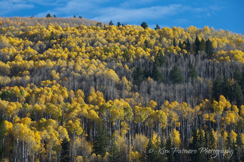 Sprinkled Aspens
