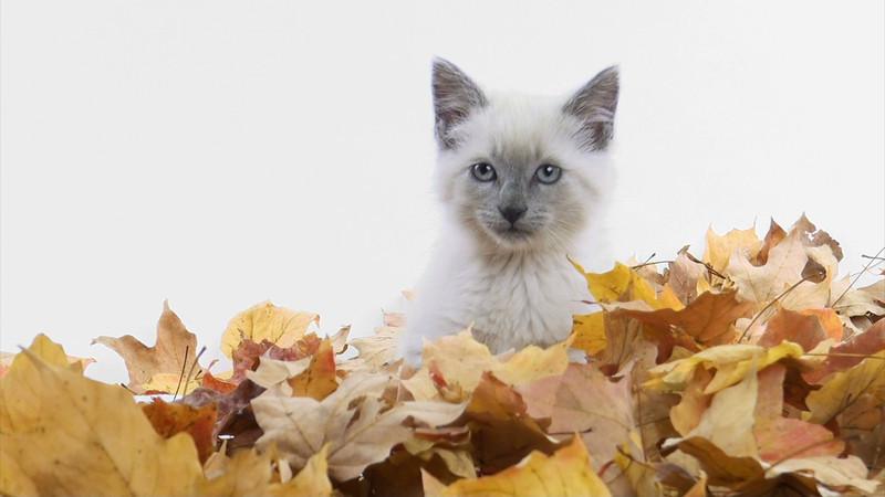 kitten_leaves_02.mov