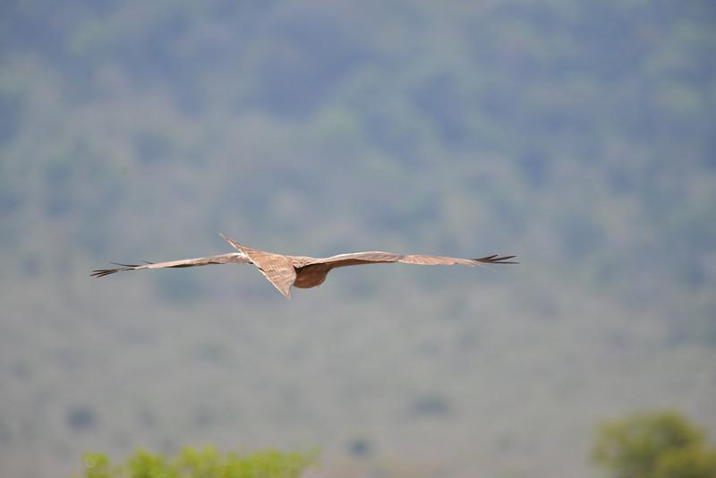 East Africa Safari 439.jpg