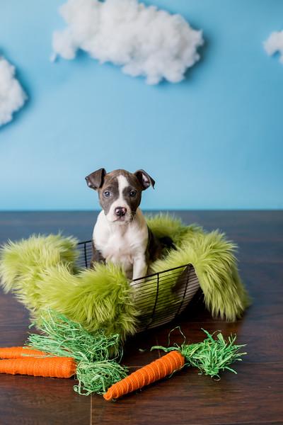 Bottle Babies Spring Pet Portraits Fundraiser