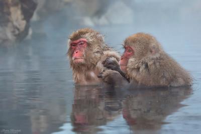 Monkeys / Apor