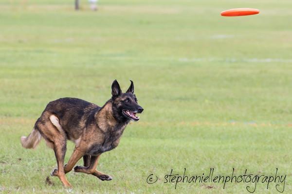 _MG_2638Up_dog_International_2016_StephaniellenPhotography.jpg