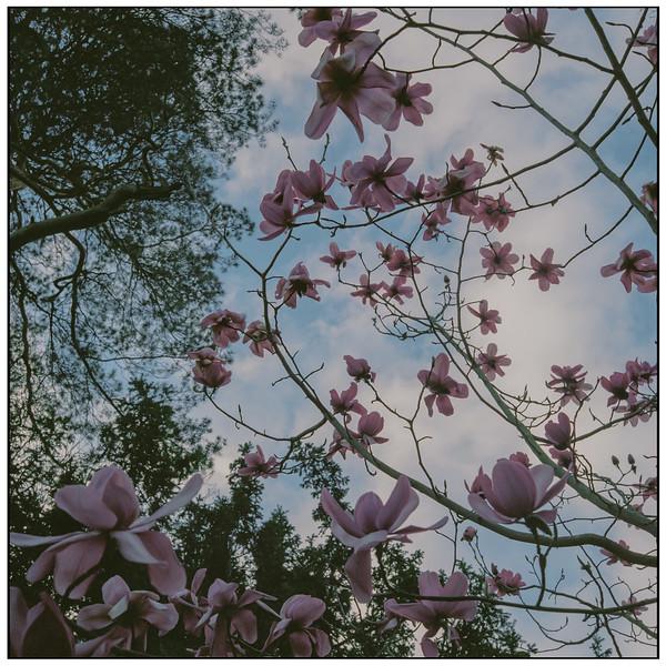 heath field gardens - shirley - croydon