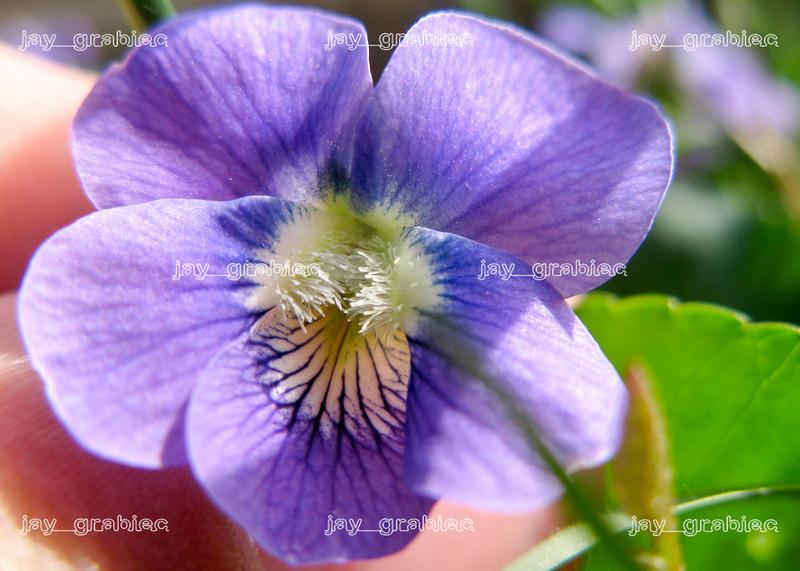 20100407_Flowers05.JPG