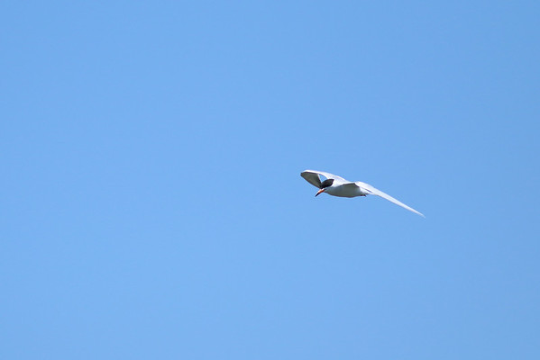 2014 - Terns