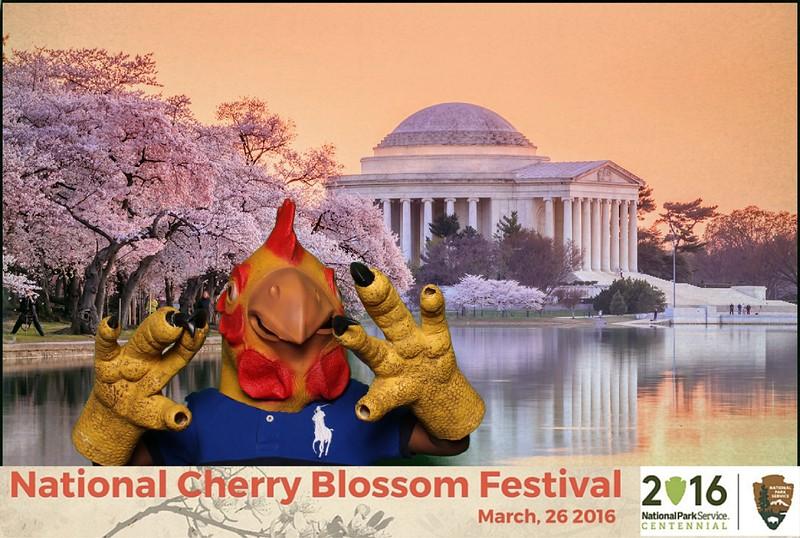 Boothie-NPS-CherryBlossom- (390).jpg