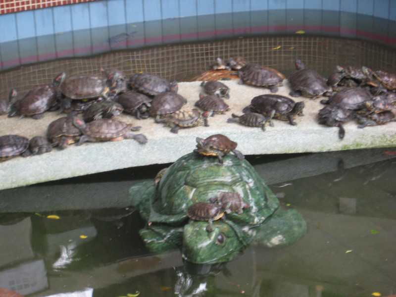 turtles_2.jpg