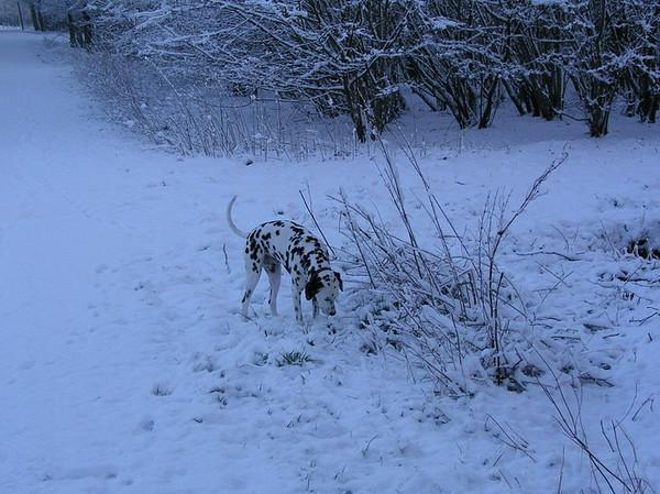 Joschka in de sneeuw