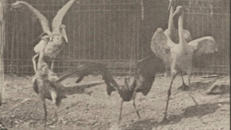 Storks, swans, etc.