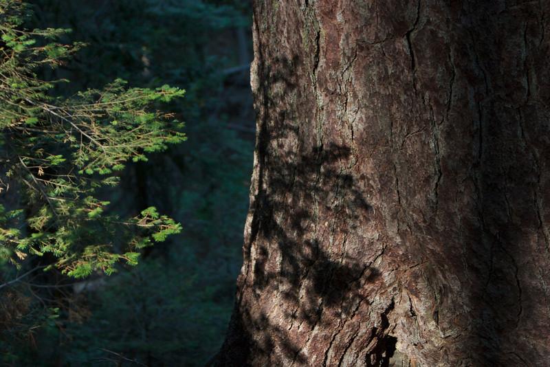 Nature  2470.jpg