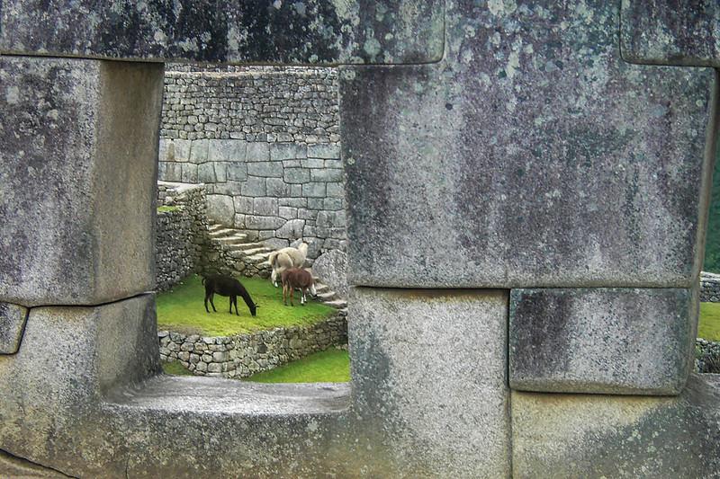 Llama Window