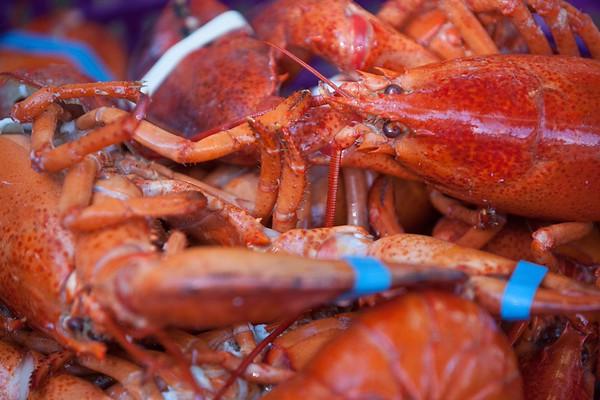 Lobster Fest 2015