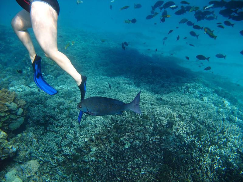 Lord Howe20080511 090804.jpg
