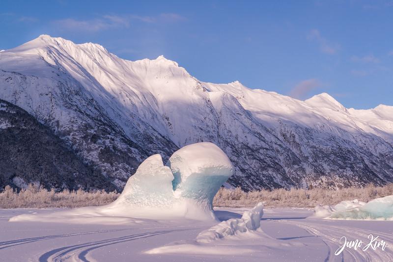 2020-01-17_Alaska Wild Guides-6102799-Juno Kim.jpg