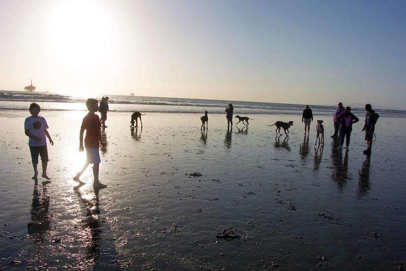 dogs_beach-43.jpg