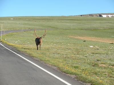 Rocky Mountain NP July 2011