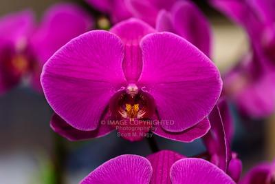 02/08/18 Orchids
